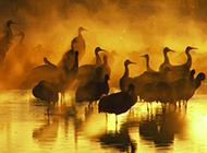 野生鸥鸟海豚高清动物图片