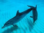 海洋中爱嬉闹的海豚图片
