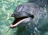 人类好友海豚动物特写
