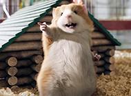 宠物土拨鼠高清壁纸图片
