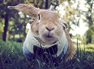 頑皮呆萌的可愛小兔子壁紙