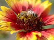 可爱的小蜜蜂