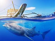 海洋里最大的鲸鱼高清图片