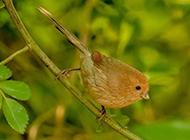 小巧迷人的小翠鸟图片