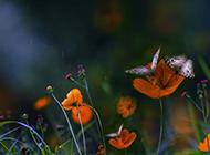 好看的蝴蝶唯美意境图片