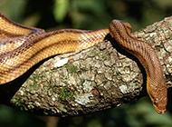 蟒蛇青竹蛇蛇類高清圖片