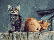 可爱的猫咪模样傲娇逗趣惹人