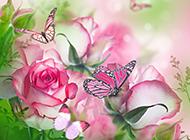 唯美浪漫的春天蝴蝶水彩花卉壁纸