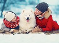 白色薩摩耶犬可愛風格圖片壁紙