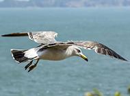 蓝天大海海鸥图片高清唯美