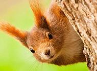 森林里讨人喜爱的松鼠图片
