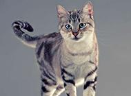 神气又超萌的猫科动物摄影壁纸