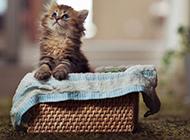 可爱猫咪萌图高清动物壁纸