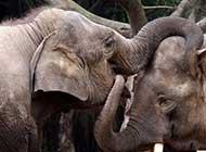 动物世界 大象的活跃