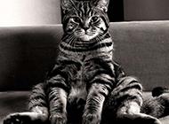 古灵精怪的超萌猫咪组图