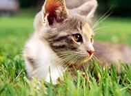 精选可爱猫咪超清晰图片