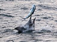淡水剑鱼海上捕鱼图片