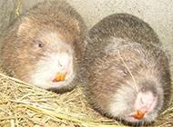 竹鼠鼠舍干凈簡易圖片