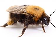 可爱的蜜蜂高清图片素材