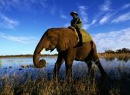 大象图片图片大全 近距离看大象