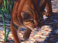 野生金貓霸氣彩繪圖片