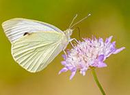 春天蝴蝶飞舞图片清新美丽
