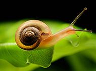 可爱的蜗牛高清微距摄影图片