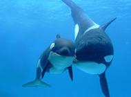海洋里可爱的鲸鱼高清图片