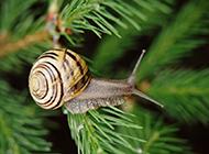 野外可爱的蜗牛摄影图片