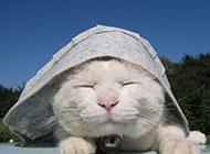 戴帽子的可爱大脸喵星人壁纸