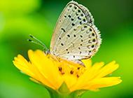 精美彩色蝴蝶高清图片欣赏