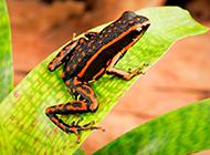 好看的彩色青蛙高清图片