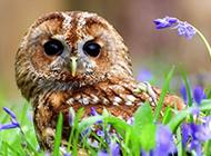 花丛中可爱的猫头鹰图片