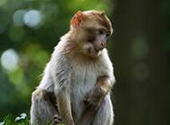 可爱萌萌哒小猴子图片