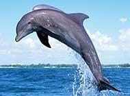 特写海洋生物 海豚