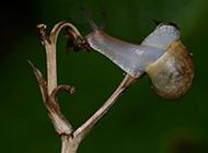 可爱的蜗牛图片近焦距特写