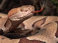 恐怖的大蟒蛇高清摄影图片