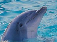 海洋精灵之海豚高清晰壁纸