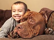 大型比特犬狗狗和寶寶圖片