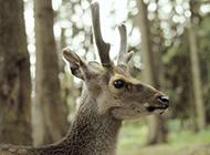 動物園長頸鹿等野生動物圖片