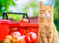超级可爱的猫高清写真图片