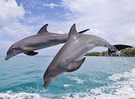 可爱海豚图片高清动物壁纸特辑