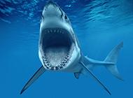 海底鯊魚模樣兇殘圖片