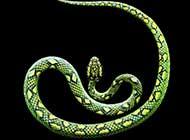 蛇的唯美千變瞬間