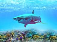 霸氣深海大鯊魚高清圖片素材