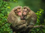 樹枝上萌萌的猴子高清圖片