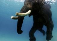 大象图片全集 大象图片