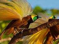 色彩繽紛的天堂鳥圖片高清