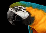 呆萌的五色鹦鹉图片写真集