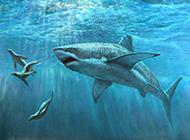 兇猛大鯊魚海里捕食圖片